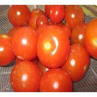 Tomato Extract thumbnail image