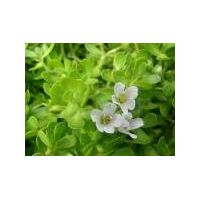 Bacopa Powder, Extract, Concentrate, Plant Extract, Capsules