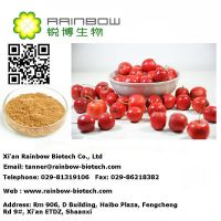 Powder HawthornExtract/Manufacturer Hawthorn exract