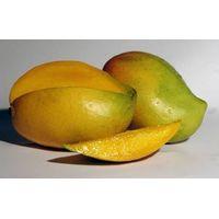 we export fresh mango fruit thumbnail image
