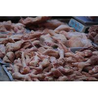 Frozen Chicken Feet/Paws thumbnail image