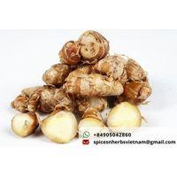Kencur sand ginger Vietnam thumbnail image
