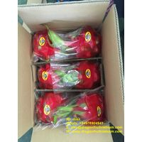 Hot Sales Dragon Fruit From Vietnam thumbnail image