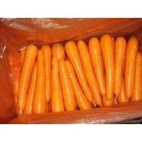 fresh carrot thumbnail image