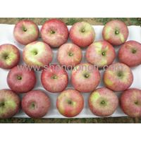 fresh  Qinguan Apple