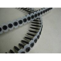 Collated drywall screw