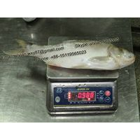 China Frozen Silver Carp Whole Round
