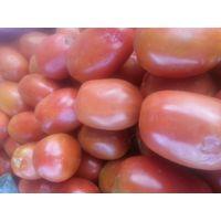 Fresh tomatoes for sale thumbnail image