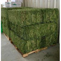 Quality Alfafa Hay grass thumbnail image