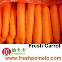carrot,white carrot, china carrot,fresh carrot