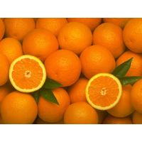 Fresh Juicy Oranges and Valencia Oranges / Fresh Oranges / Fresh Mandarin Oranges,Lemons