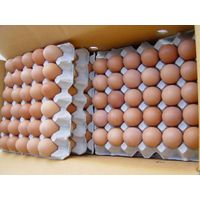 Fresh Brown Table Chicken Eggs thumbnail image