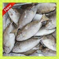 IQF 4-6pcs/kg whole round/headless rabbit fish (Siganus Canaliculatus) manufacture