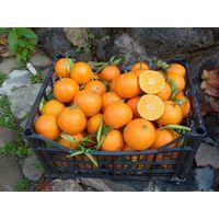 Fresh mandarine  & sastuma thumbnail image