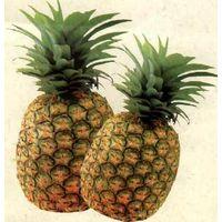 Wholesale bromelain, pineapple extract