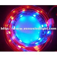 strip led light 5050smd blue/red IP67 LED Strip Light SMD5050 150LEDs 5m Waterproof