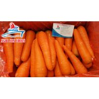 Fresh Carrot from Vietnam (+84 1679756513)