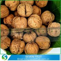 Wholesale Whole Walnut In Shell thumbnail image