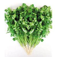 10:1 Yellow-green fine powder UV Coriander Herb Extract