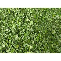 100% Pure Natural Moringa Leaves Exporters