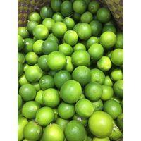Seedless Lime thumbnail image