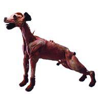 The Nervous System of Dog thumbnail image