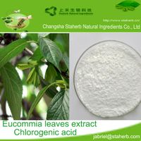 Free sample Eucommia leaf extract,Chlorogenic acid 5-98%