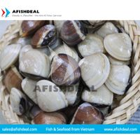 CLAM - SCALLOP - SQUID - CUTTLEFISH FISH - SEAFOOD - MOLLUSKS - FROZEN - ORIGIN VIETNAM thumbnail image