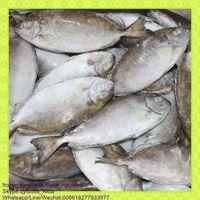 fresh frozen fish whole round/headless rabbit fish (Siganus Canaliculatus)