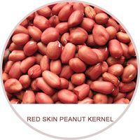 Red skin peanut, Chinese Peanut, groundnuts, raw and roasted peanut