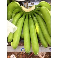 Vietnam Fresh Green Cavendish Bananas thumbnail image