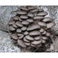 sell fresh / frozen oyster mushroom thumbnail image