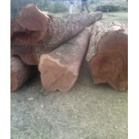 Balsamo with smell / Santos Mahogany on Logs