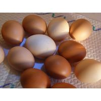 Farm fresh chicken table eggs Brown & White Shell