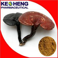 100% Natural Ganoderma lucidum Extract