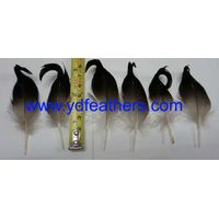 Best Quality Wild Duck Feather for Garment Accessiores