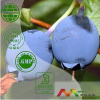 100% Natural Good Blueberry Extract Powder