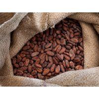 Grade A Cocoa Beans