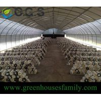6m Wide Tomato Greenhouse thumbnail image