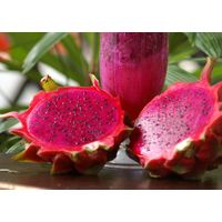 Global Gap Tropical Fruits From Vietnam - High Quality Fresh Dragon Fruit