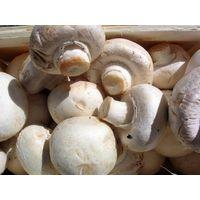 Thailand IQF mushroom thumbnail image