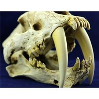 Saber Tooth Cat Tiger Skull  resin crafts