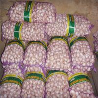 Chinese shandong garlic from professional garlic suppliers in China