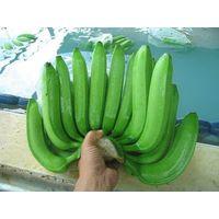 Fresh Cavendish Bananas thumbnail image