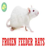 Frozen Feeder Rats for Reptiles, Amphibians, Birds of Prey, Carnivorous Animals Wholesale thumbnail image