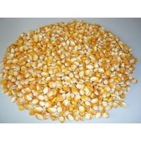 Maize / Yellow Corn Animal Feed