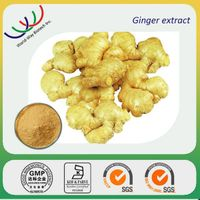 high quality Zingiber officinale extract