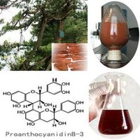 Pine Bark Extract with 30%-95% Polyphenols