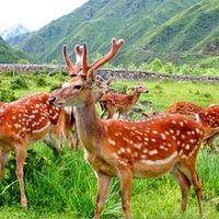 Ginseng Deer Penis oyster bioactive peptides Herbal Male Enhancement Sexual Increments Sexual Desire thumbnail image