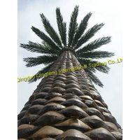 Arabian Date Palm Monopole